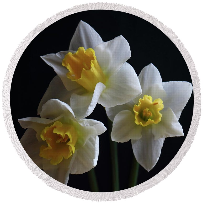 Daffadowndilly Round Beach Towel featuring the photograph Three Daffodil by Jeff Townsend
