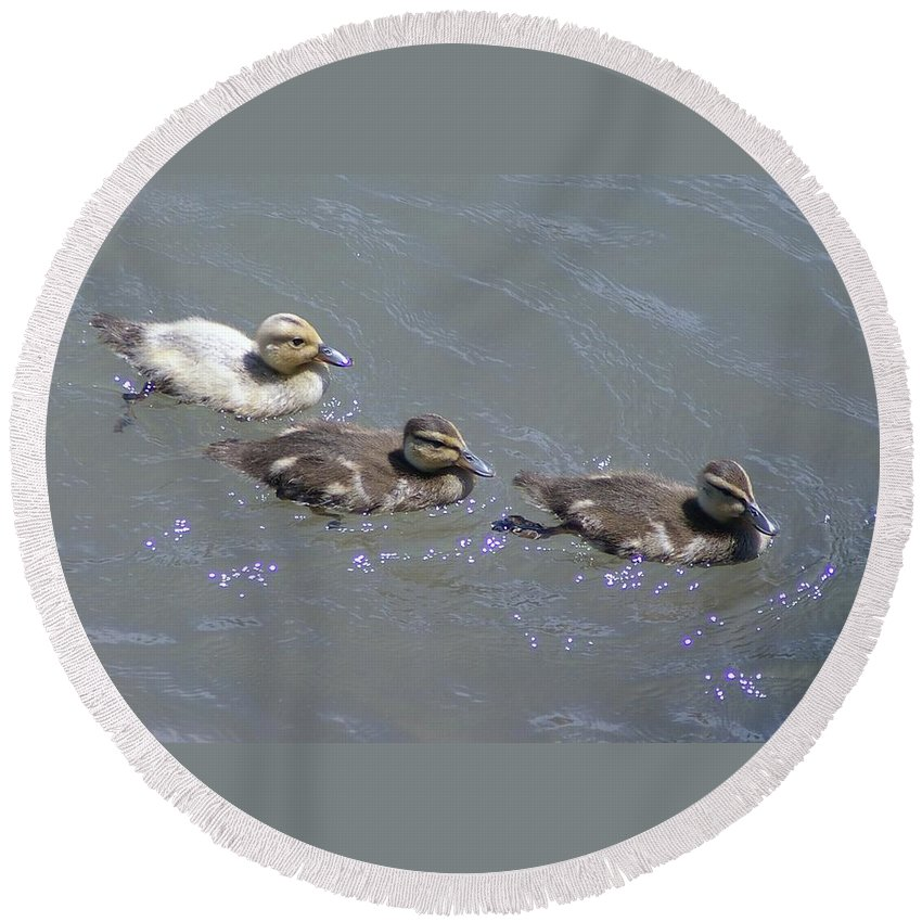 Fowl Round Beach Towel featuring the photograph Three Duckies by Jeff Swan