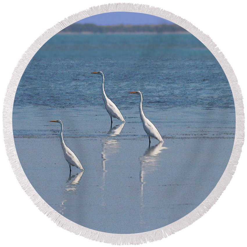 Terns Round Beach Towel featuring the photograph three Egrets by W Gilroy
