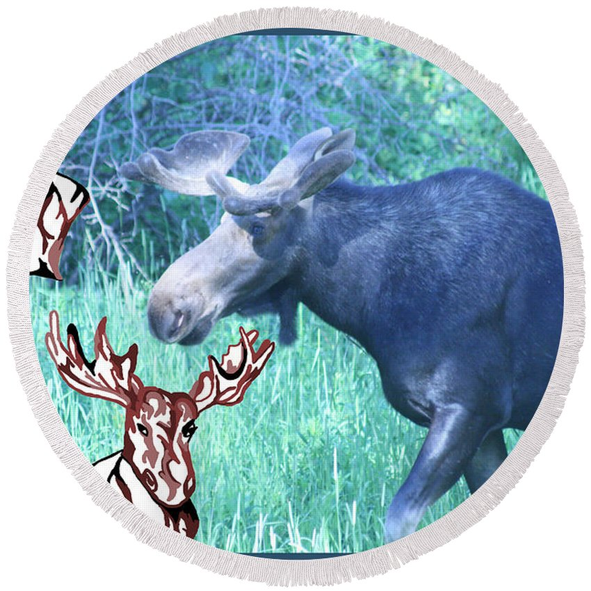 Nature Round Beach Towel featuring the photograph Three Moose by Mary Mikawoz