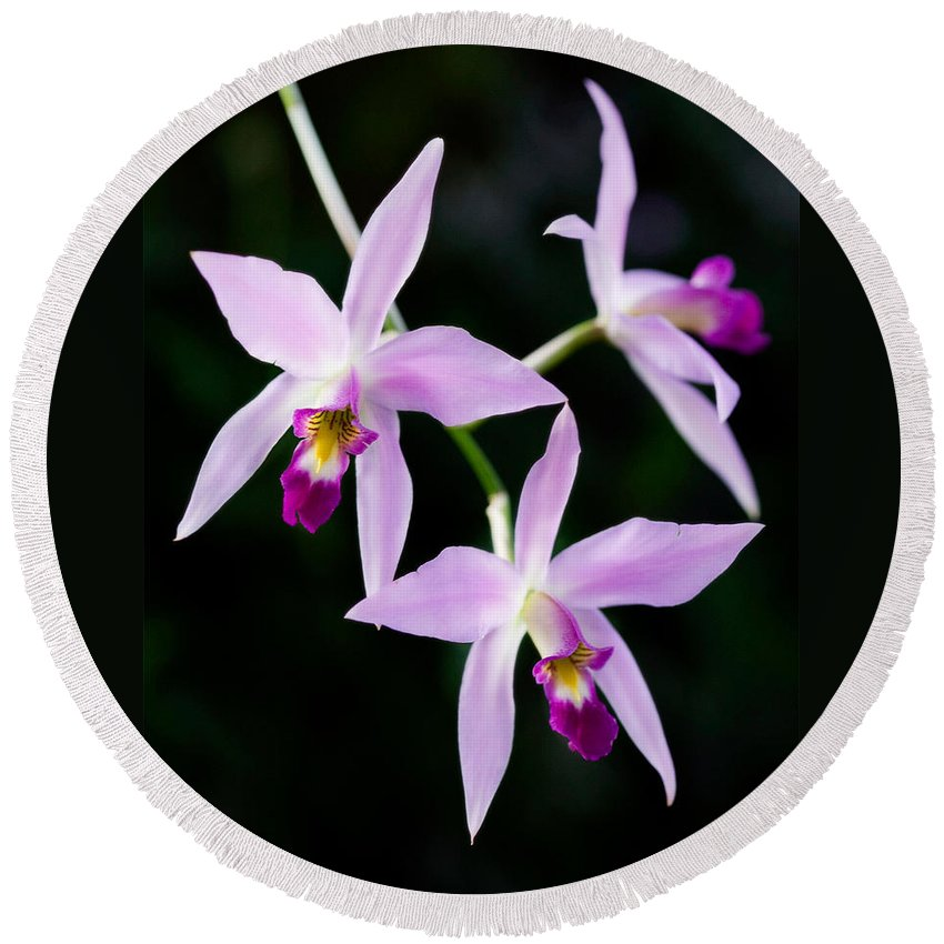 Orchid Round Beach Towel featuring the photograph Three Orchids by Marilyn Hunt