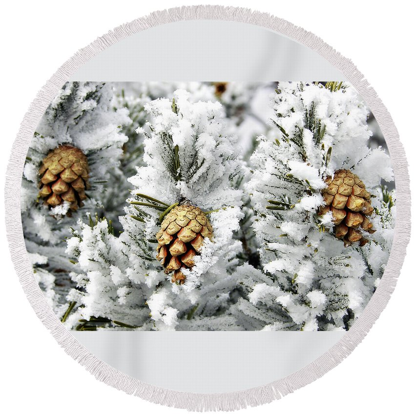 Frosty Round Beach Towel featuring the photograph Three Pinecones by Marilyn Hunt