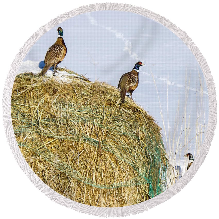Round Beach Towel featuring the photograph Three Roosters by Dan Kinghorn
