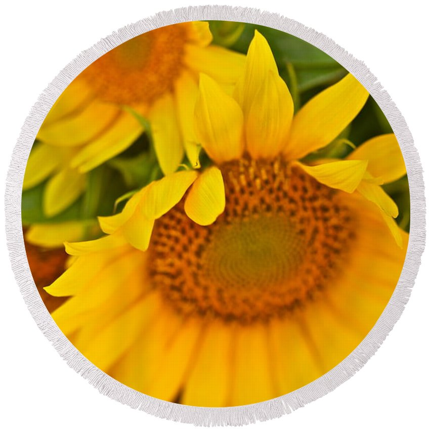 Yellow Round Beach Towel featuring the photograph Three Sunflowers by Nadine Rippelmeyer