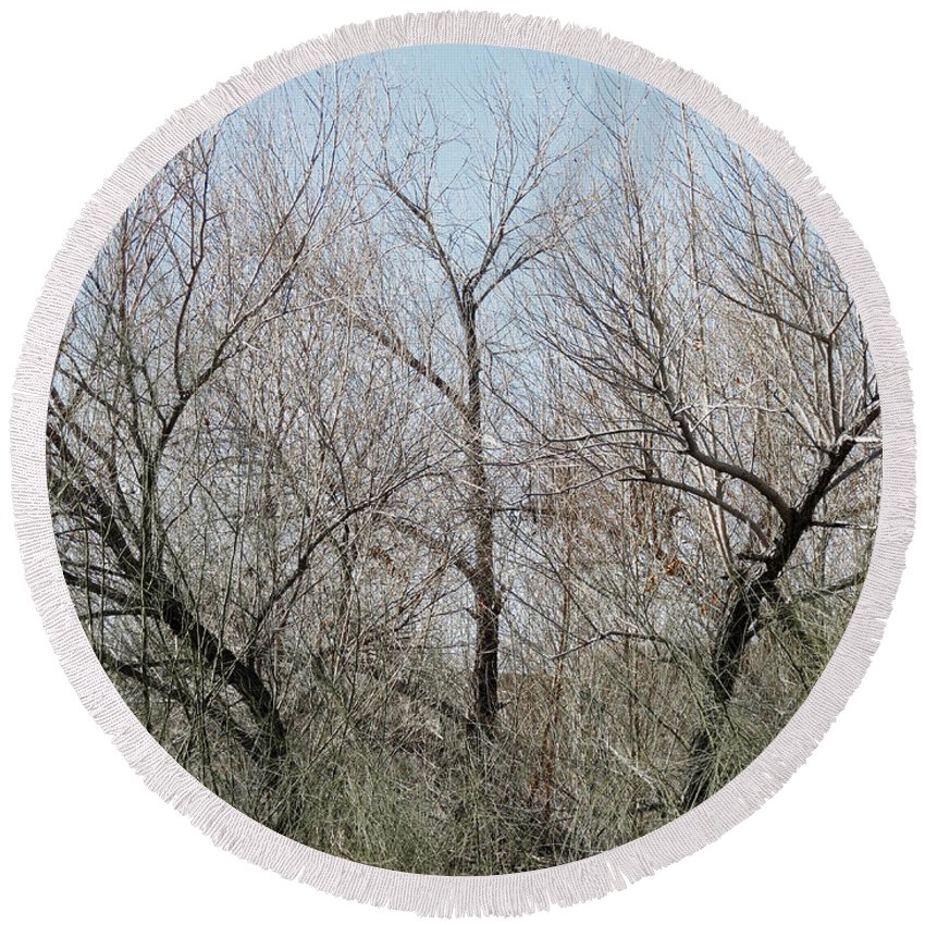 Bare Round Beach Towel featuring the photograph Three Trees by Laurel Powell