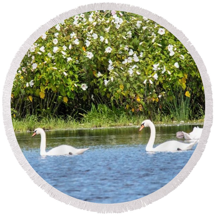 Swans Round Beach Towel featuring the photograph Three's A Crowd by Tom Horsch Photography
