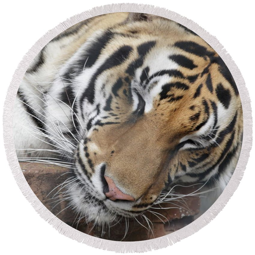 Tiger Round Beach Towel featuring the photograph Tiger 2 by Jim Allsopp