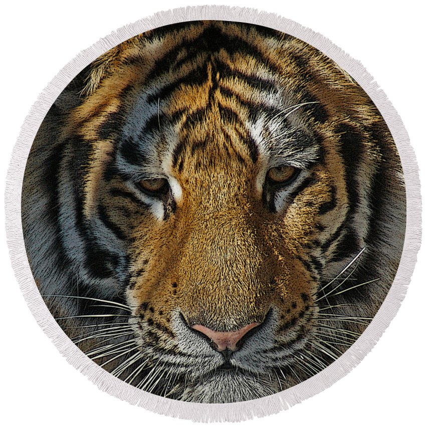Tiger Round Beach Towel featuring the photograph Tiger 5 Posterized by Ernie Echols