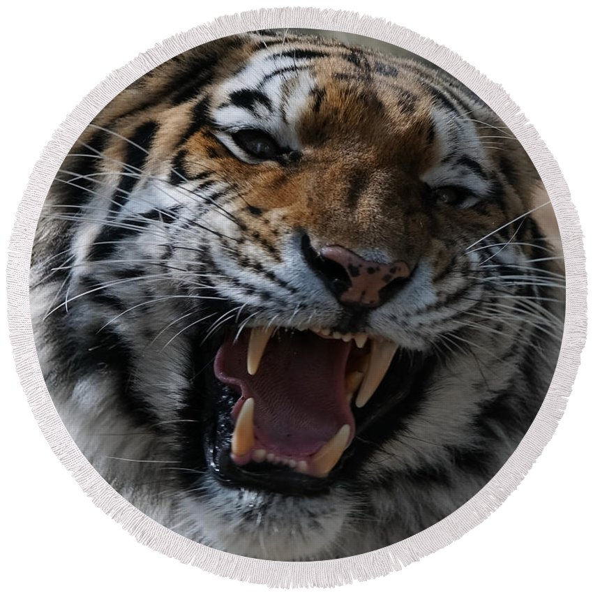 Tiger Round Beach Towel featuring the photograph Tiger Faces 2 by Ernie Echols