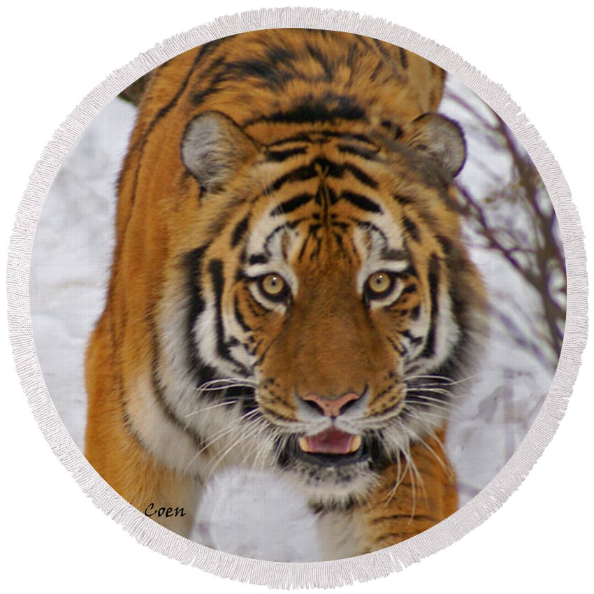 Tiger Round Beach Towel featuring the photograph Tiger by Heather Coen