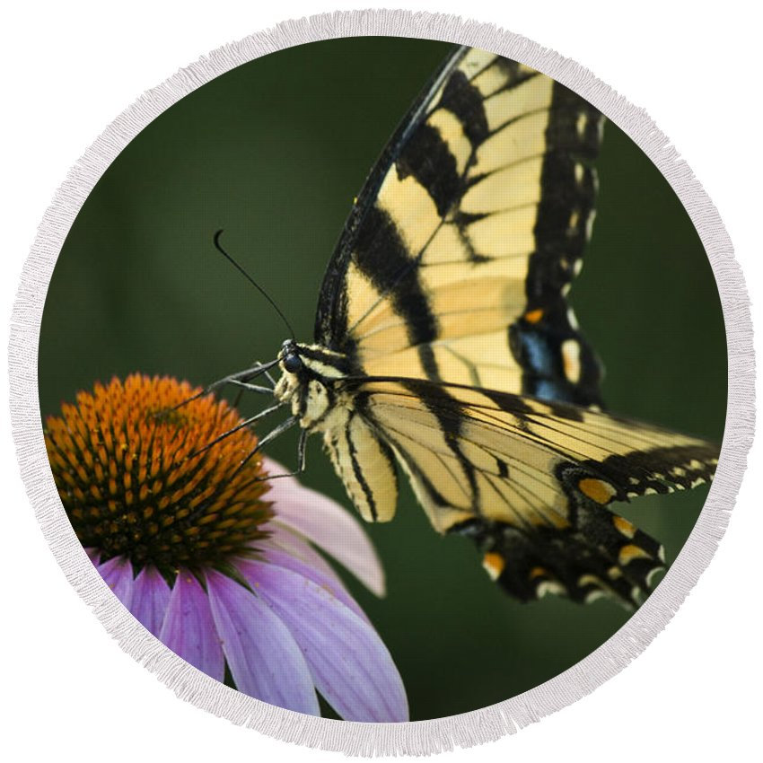 Butterfly Round Beach Towel featuring the photograph Tiger Swallowtail 1 by Teresa Mucha