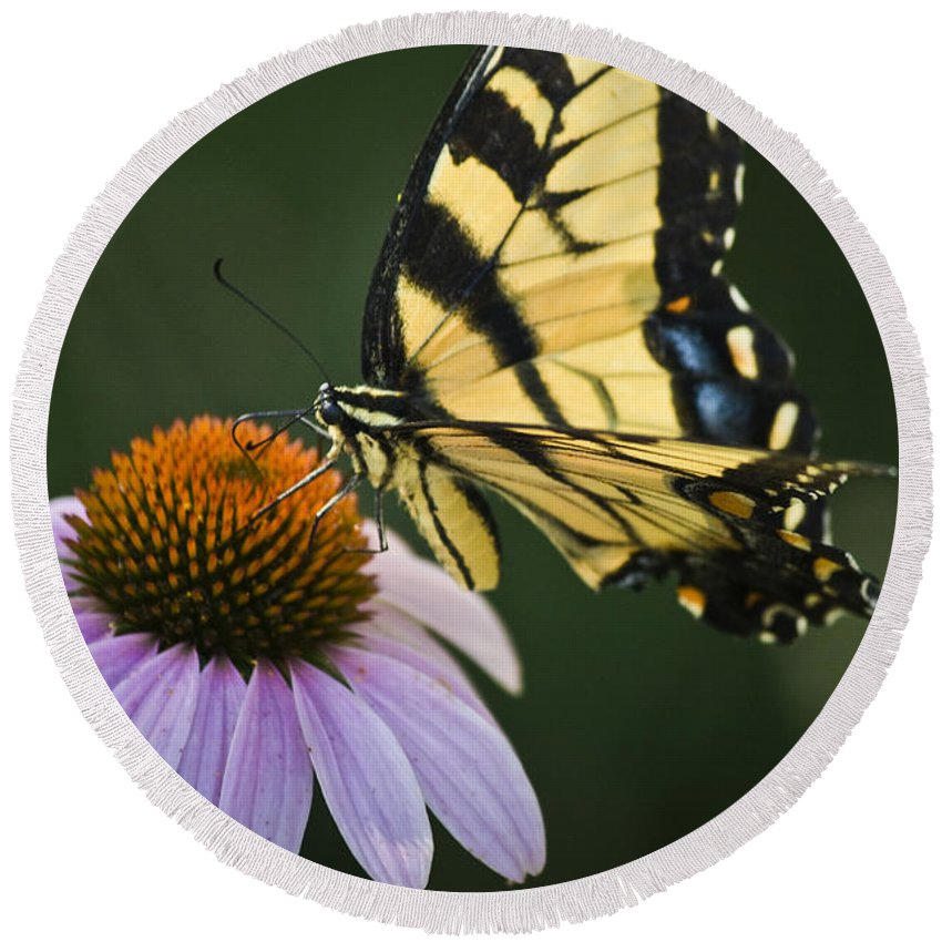 Garden Round Beach Towel featuring the photograph Tiger Swallowtail 2 by Teresa Mucha
