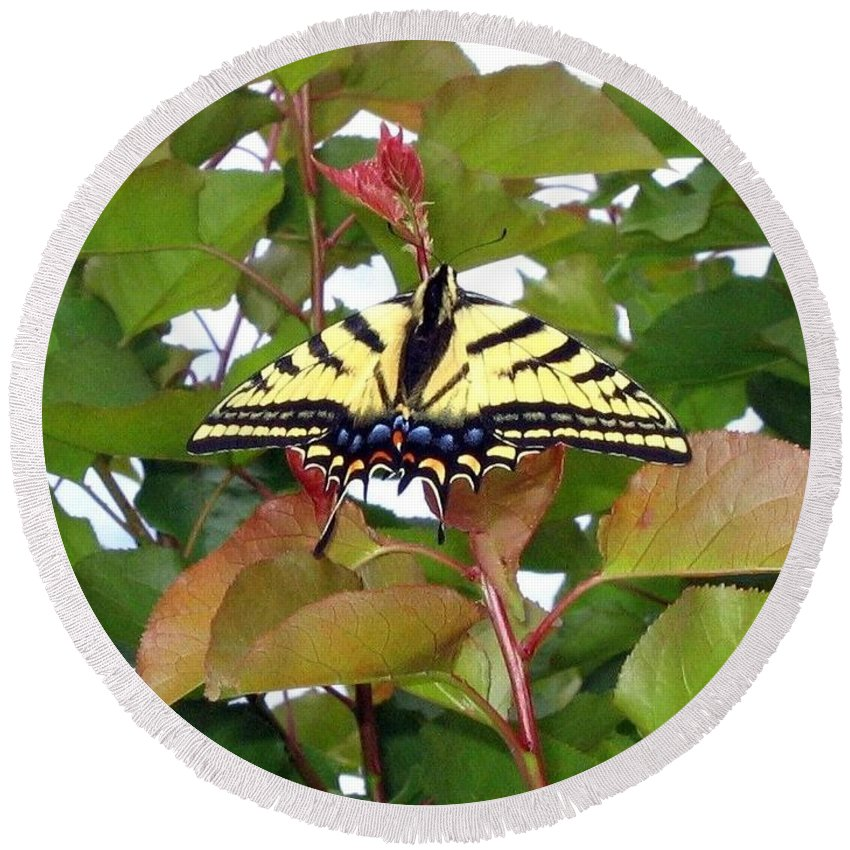 Butterfly Round Beach Towel featuring the photograph Tiger Swallowtail Butterfly by Will Borden