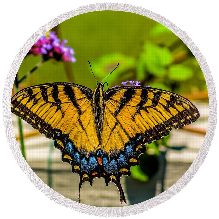 Tiger Round Beach Towel featuring the photograph Tiger Swallowtail Butterfly By Fence by Nick Zelinsky