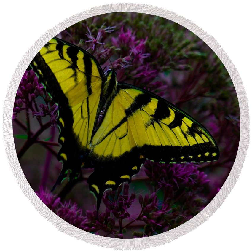Butterfly Round Beach Towel featuring the photograph Tiger Swallowtail by Chris Lord