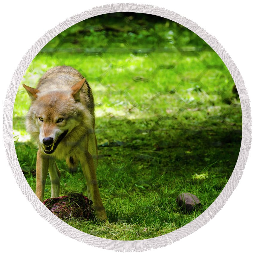 Fence Round Beach Towel featuring the photograph Timber Wolf by Louis-Martin Carriere