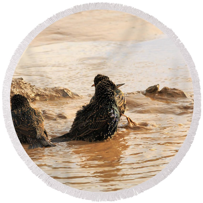 Bath Round Beach Towel featuring the photograph Time For A Mud Bath by Travis Rogers