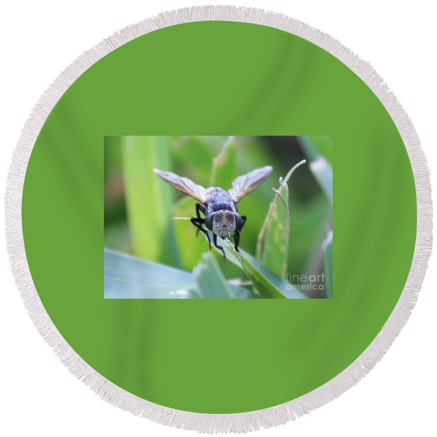 Fly Round Beach Towel featuring the photograph Tiny Fly by Carol Groenen