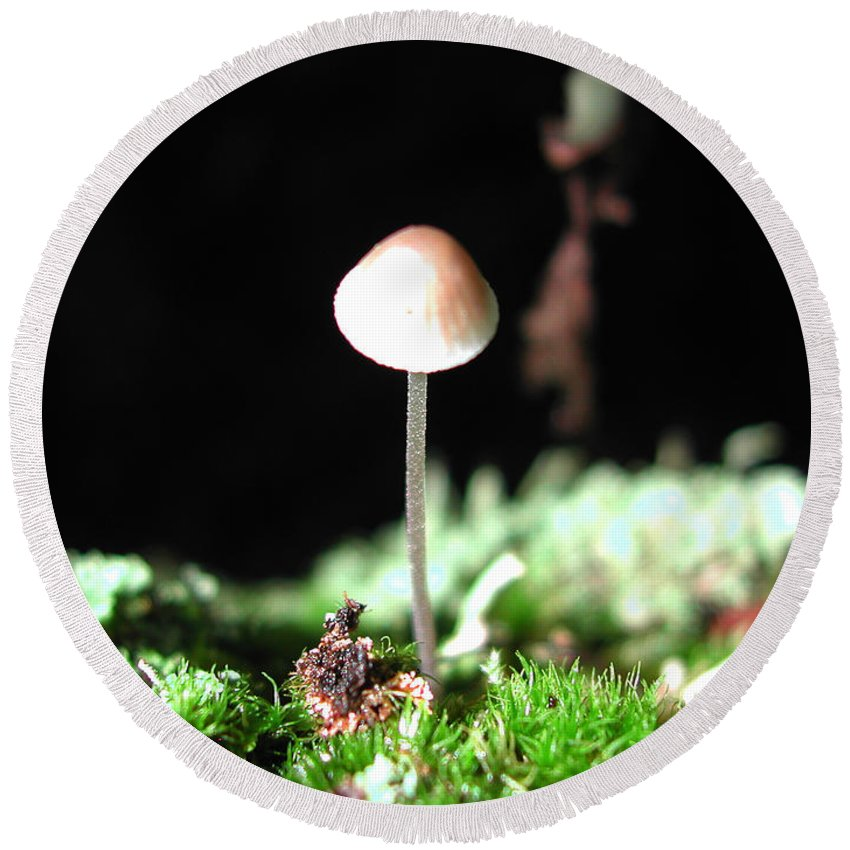 Nature Round Beach Towel featuring the photograph Tiny Mushroom 2 by Steven Scanlon