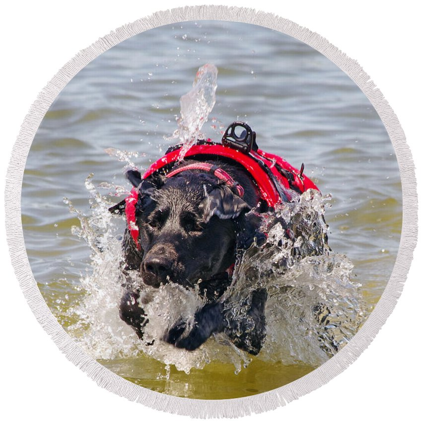Dog Round Beach Towel featuring the photograph To The Rescue by Jenny Gandert