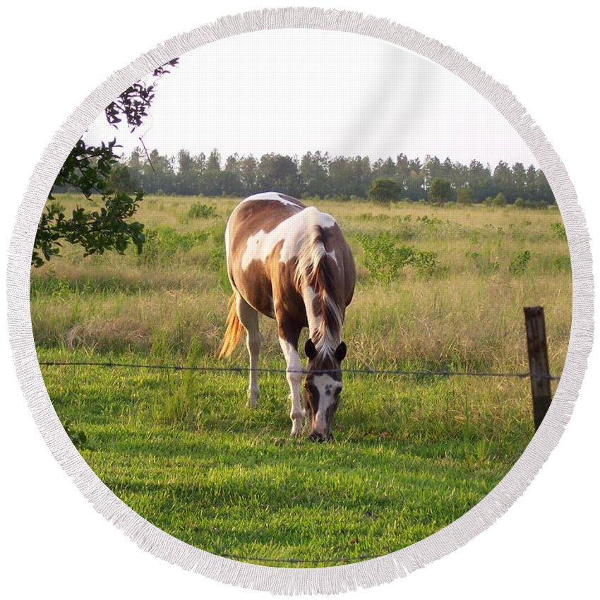 Horse Round Beach Towel featuring the photograph Tobiano Horse In Field by Brandy Woods