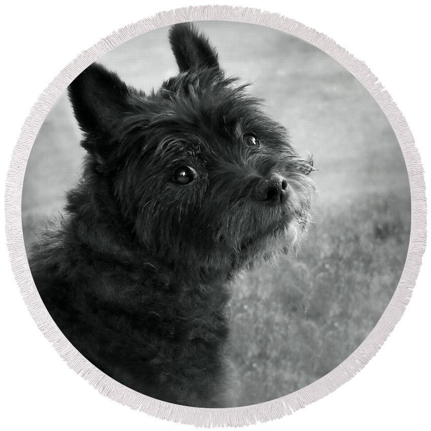 Dog Round Beach Towel featuring the photograph Toby by Julie Dybevik