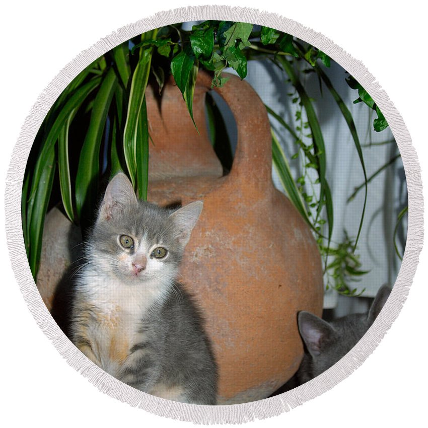Cat Round Beach Towel featuring the photograph Too Cute Even If Classic by Iordanis Pallikaras