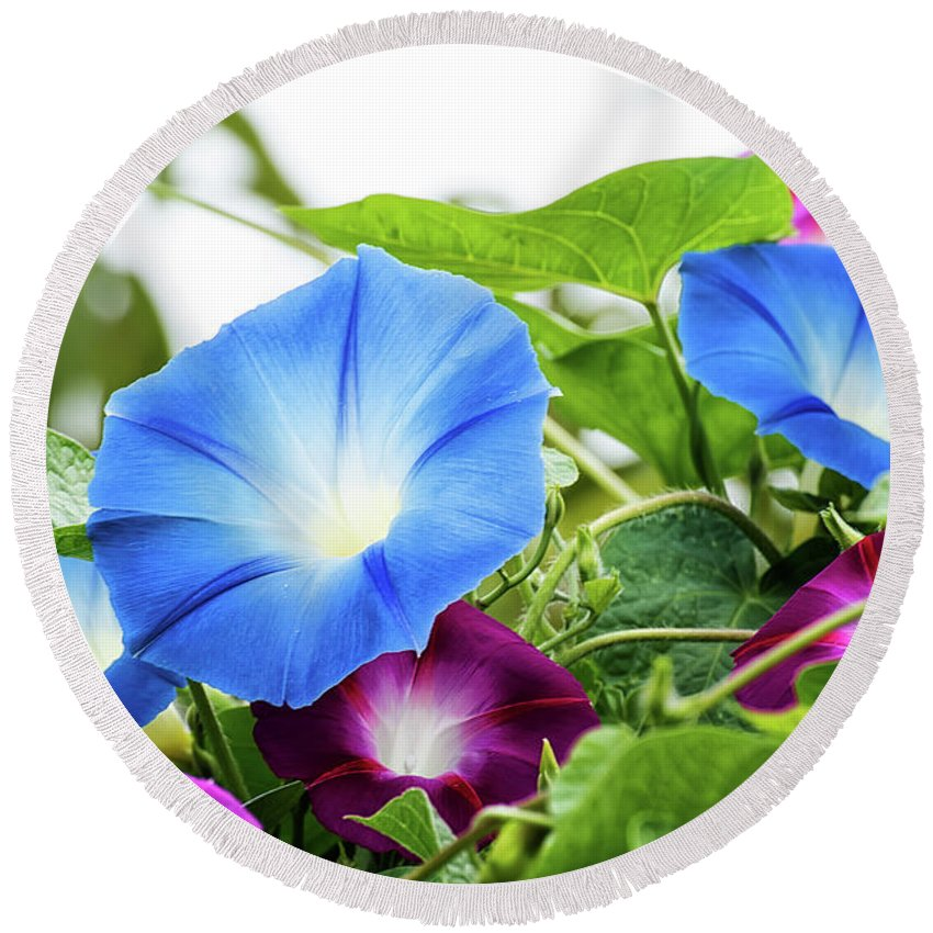 Round Beach Towel featuring the photograph Top Of The Morning Glories by Camille Lopez