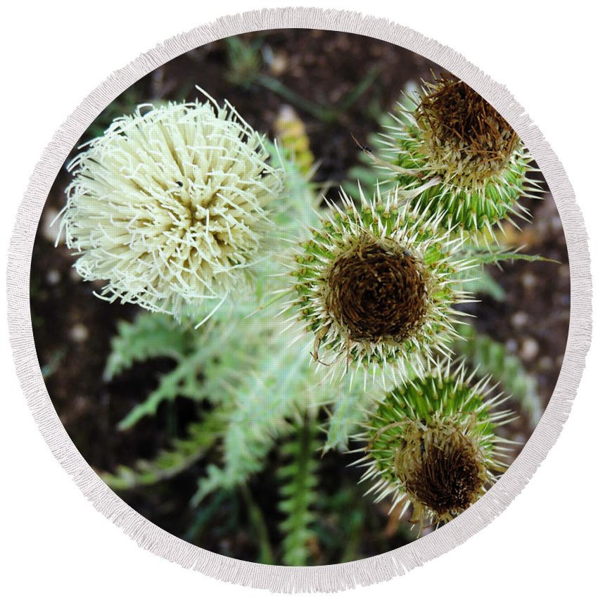 Blossom Round Beach Towel featuring the photograph Top Thistle by Grant Bolei