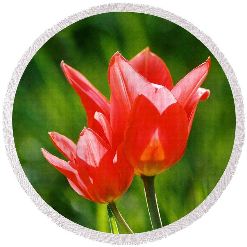 Flowers Round Beach Towel featuring the photograph Toronto tulip by Steve Karol
