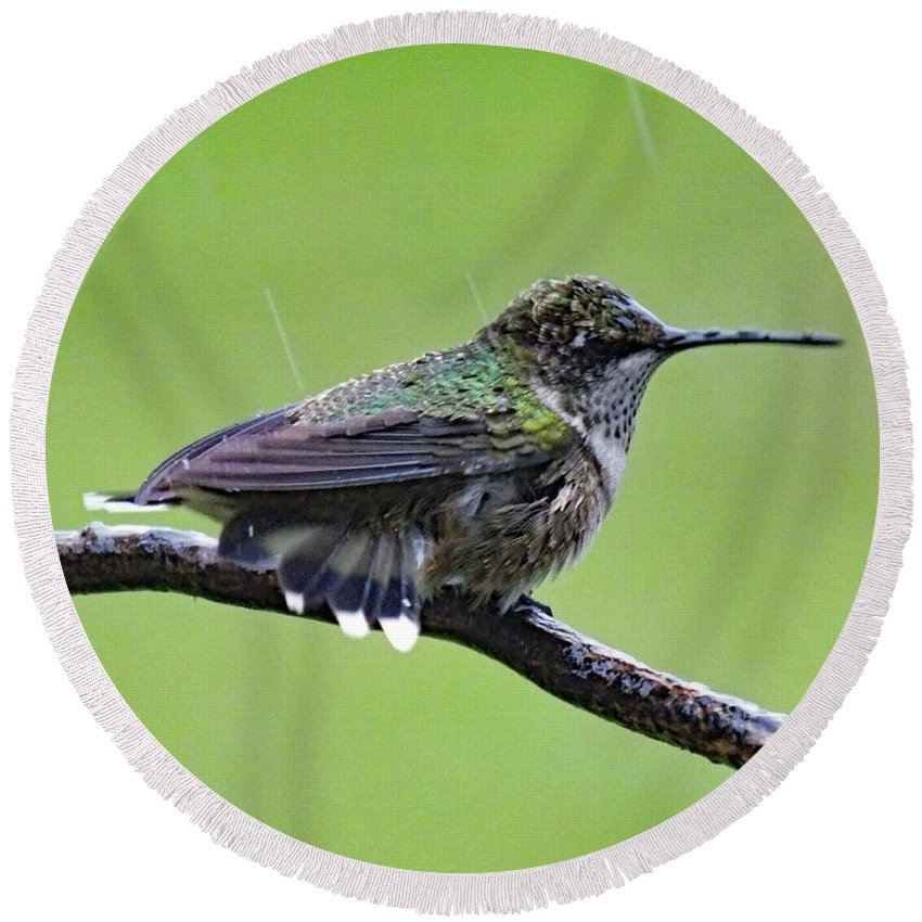 Hummingbird Photo Round Beach Towel featuring the photograph Totally Wet But Beautiful - Ruby-throated Hummingbird by Cindy Treger