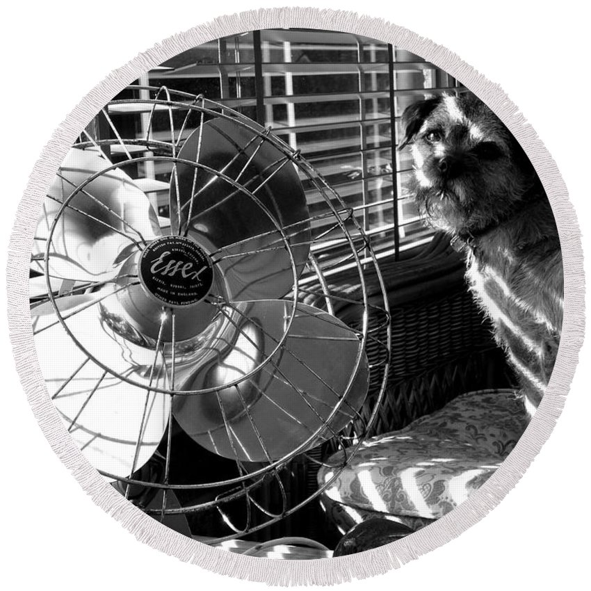 Electric Fan Round Beach Towel featuring the photograph Toto Checks In by Charles Stuart