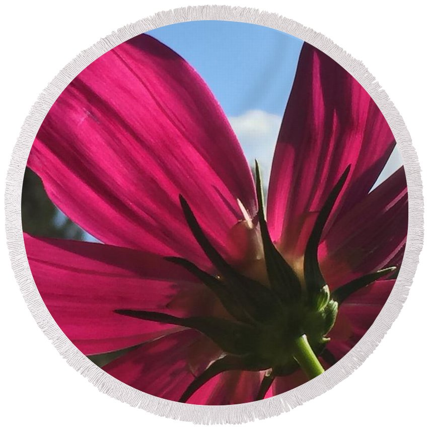 Flower Round Beach Towel featuring the painting Toward the Light by Vonda Drees