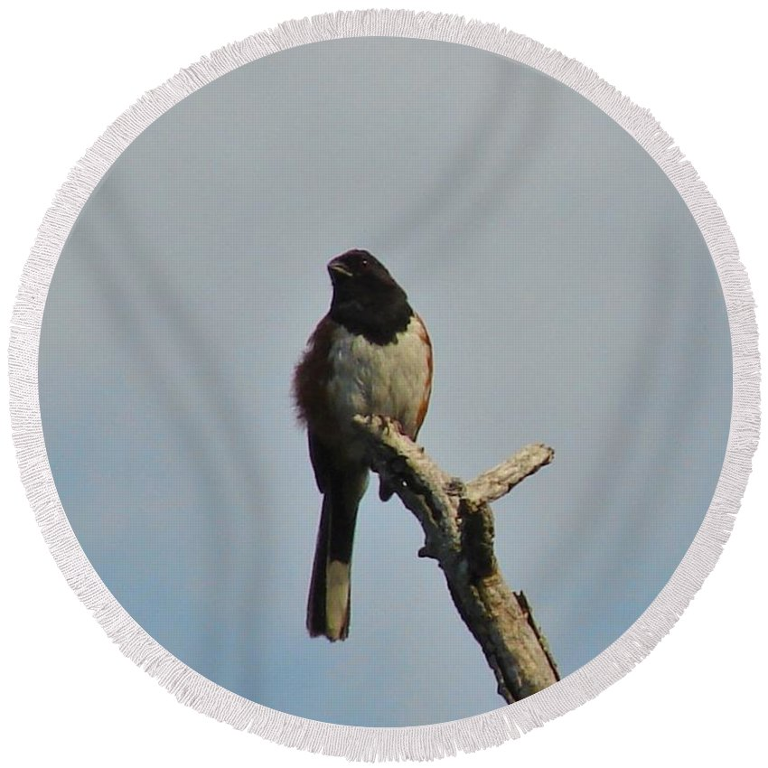 Bird Round Beach Towel featuring the photograph Towhee by Carl Moore