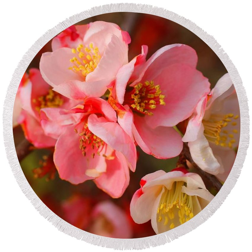 Quince Round Beach Towel featuring the photograph Toyo-nishiki Quince Blooms by Kathryn Meyer