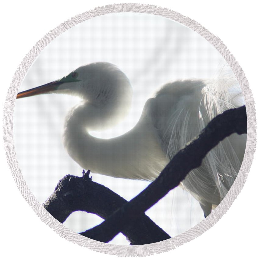 Plumage Round Beach Towel featuring the photograph Translucent by Chuck Hicks