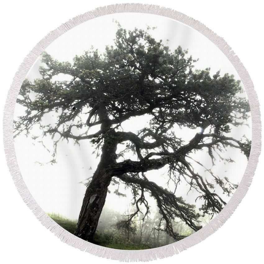 Hdr Round Beach Towel featuring the photograph Tree by Alex Grichenko