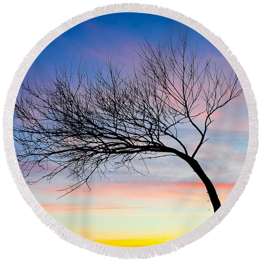 Blue Round Beach Towel featuring the photograph Tree Branches by Svetlana Sewell