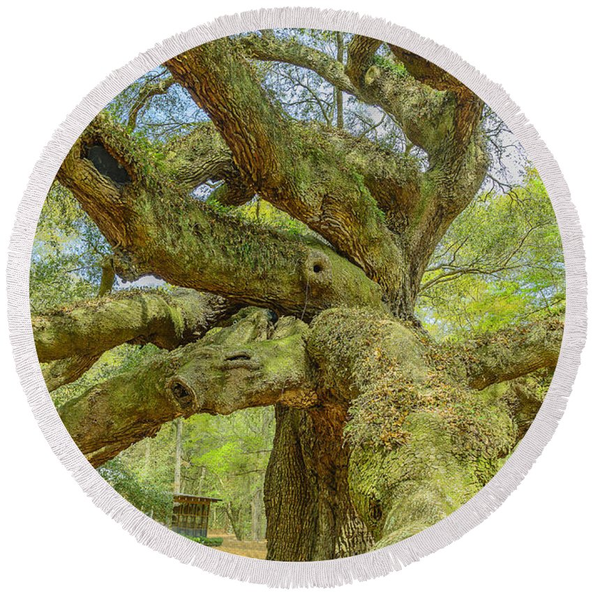 South Carolina Round Beach Towel featuring the photograph Tree For The Ages by Elvis Vaughn