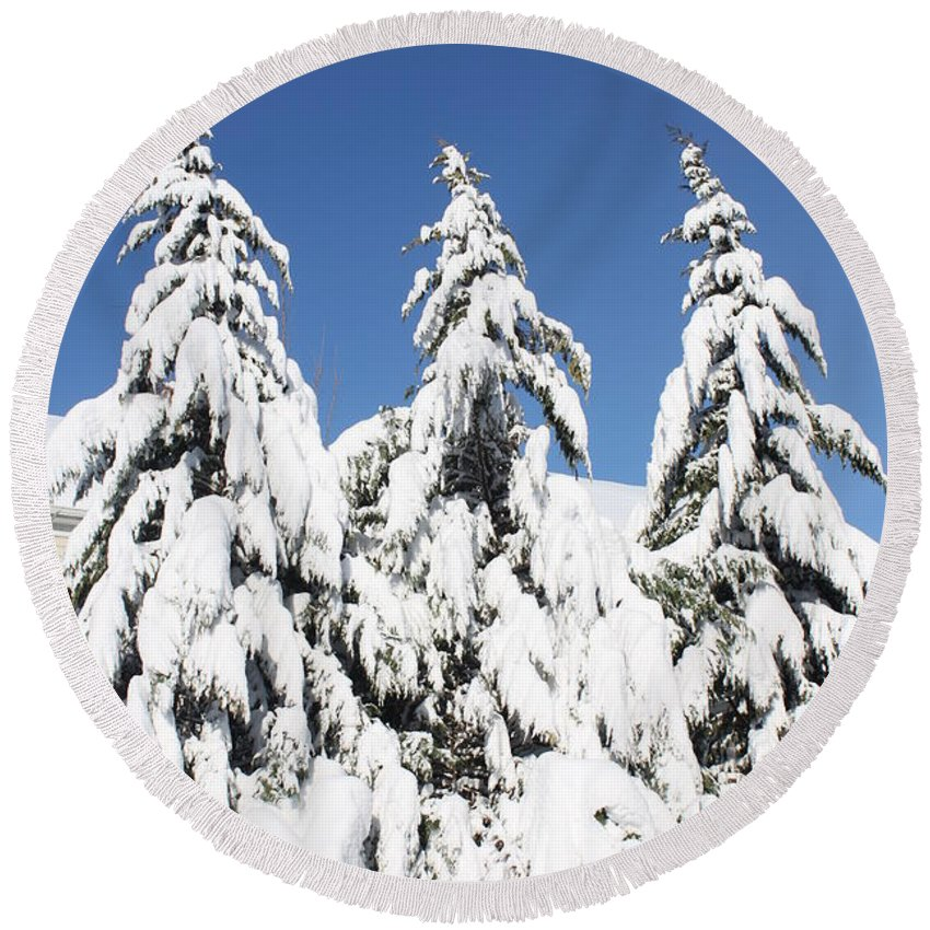 Snow Round Beach Towel featuring the photograph Tree-o Of Evergreens by Lauri Novak