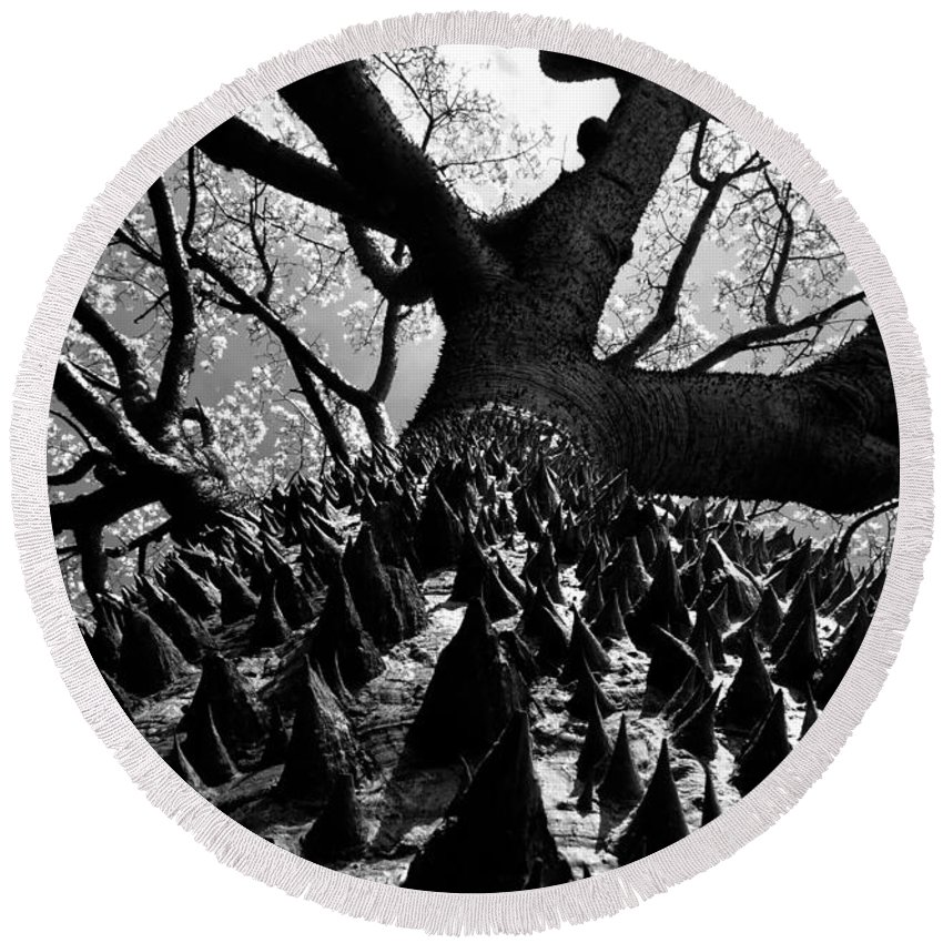 Tree Round Beach Towel featuring the photograph Tree Of Thorns B by David Lee Thompson