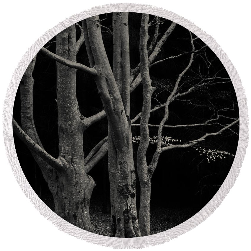 Beech Tree Round Beach Towel featuring the photograph Beech Tree by Dave Bowman