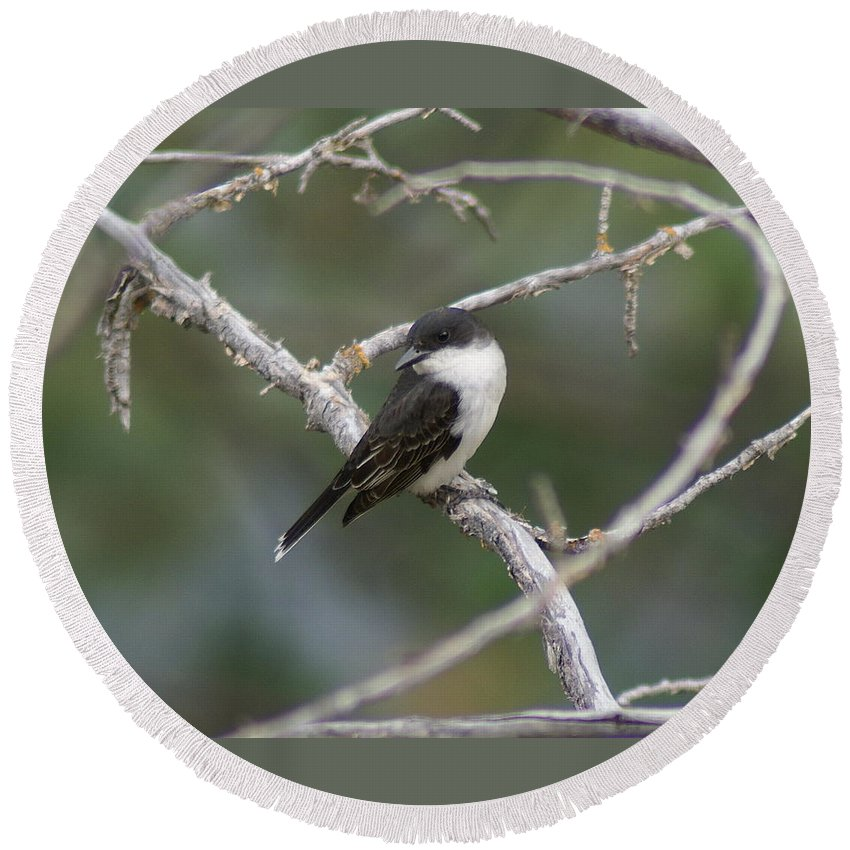 Birds Round Beach Towel featuring the photograph Tree Swallow by Ben Upham III