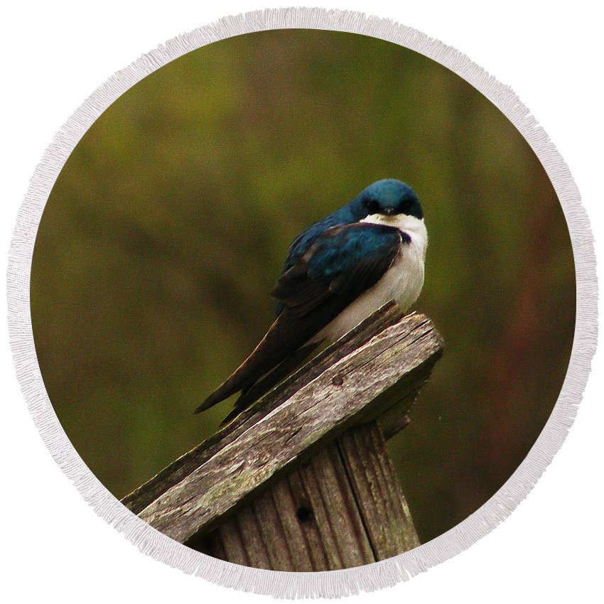 Birds Round Beach Towel featuring the photograph Tree Swallow by Marilyn Smith