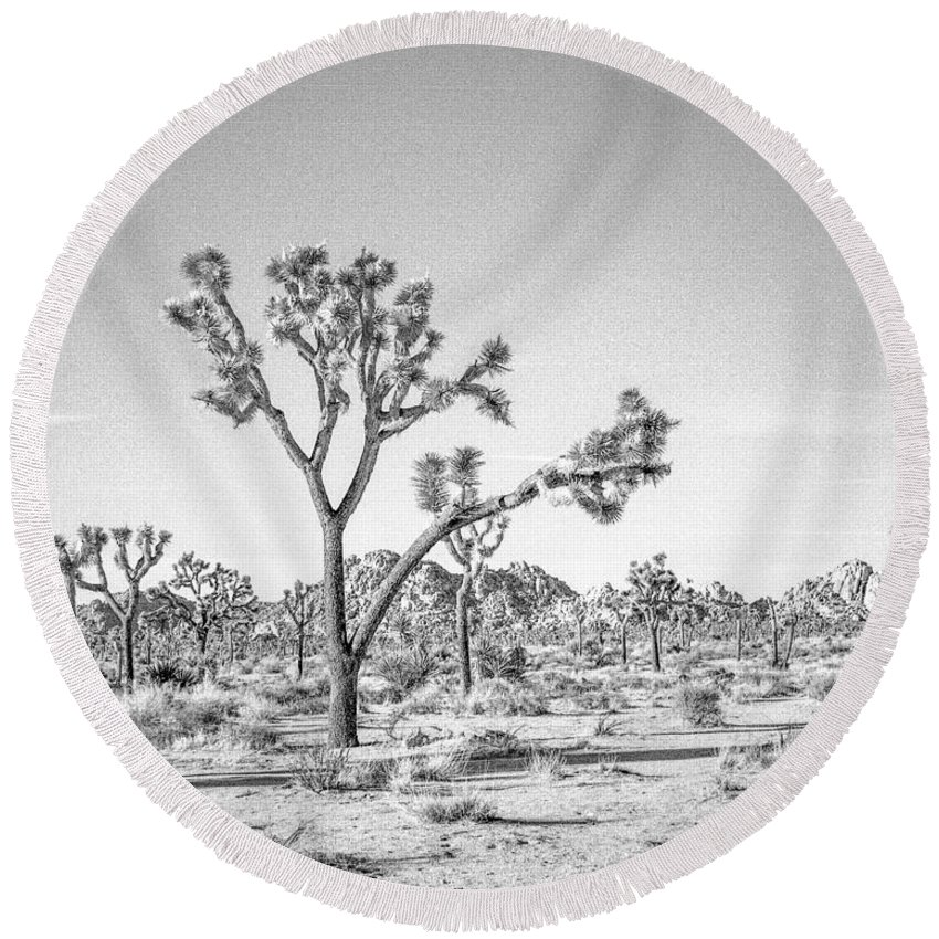 Joshua Tree Round Beach Towel featuring the photograph Tree Valley by Alex Snay