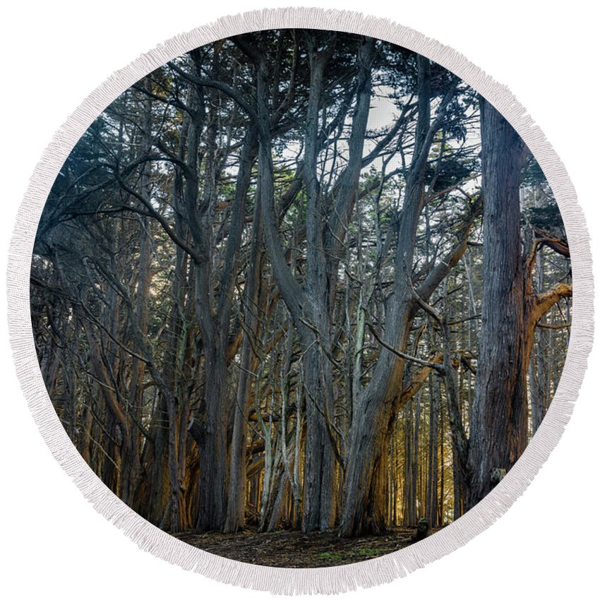 Landscape Round Beach Towel featuring the photograph Tree Wall by Javier Flores