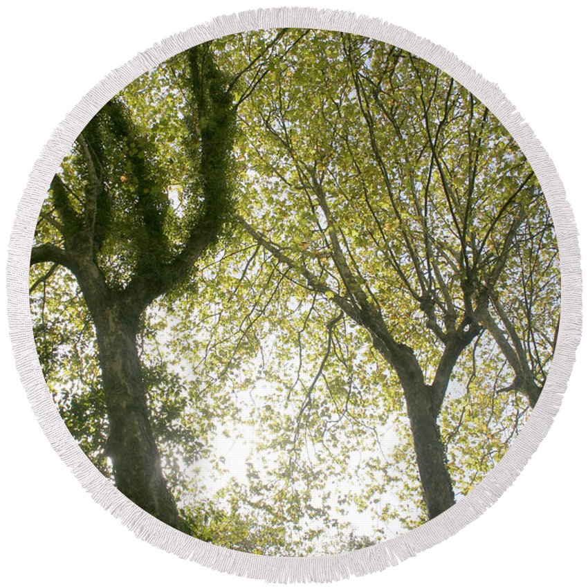 Olive Round Beach Towel featuring the photograph Trees by Vladi Alon