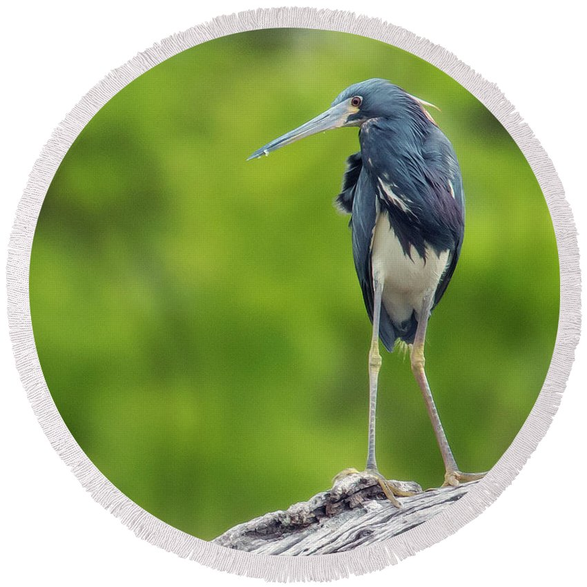 Heron Round Beach Towel featuring the photograph Tri-color Heron by KenDidIt Photography
