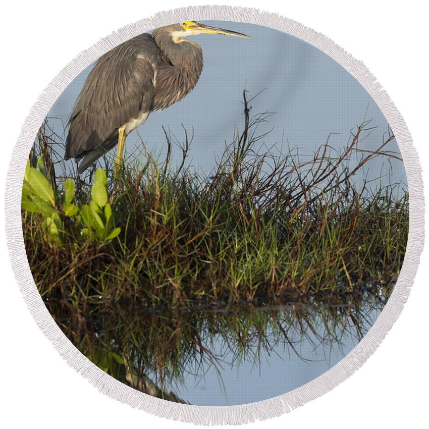 Tri-colored Round Beach Towel featuring the photograph Tri-colored Heron And Reflection by David Watkins