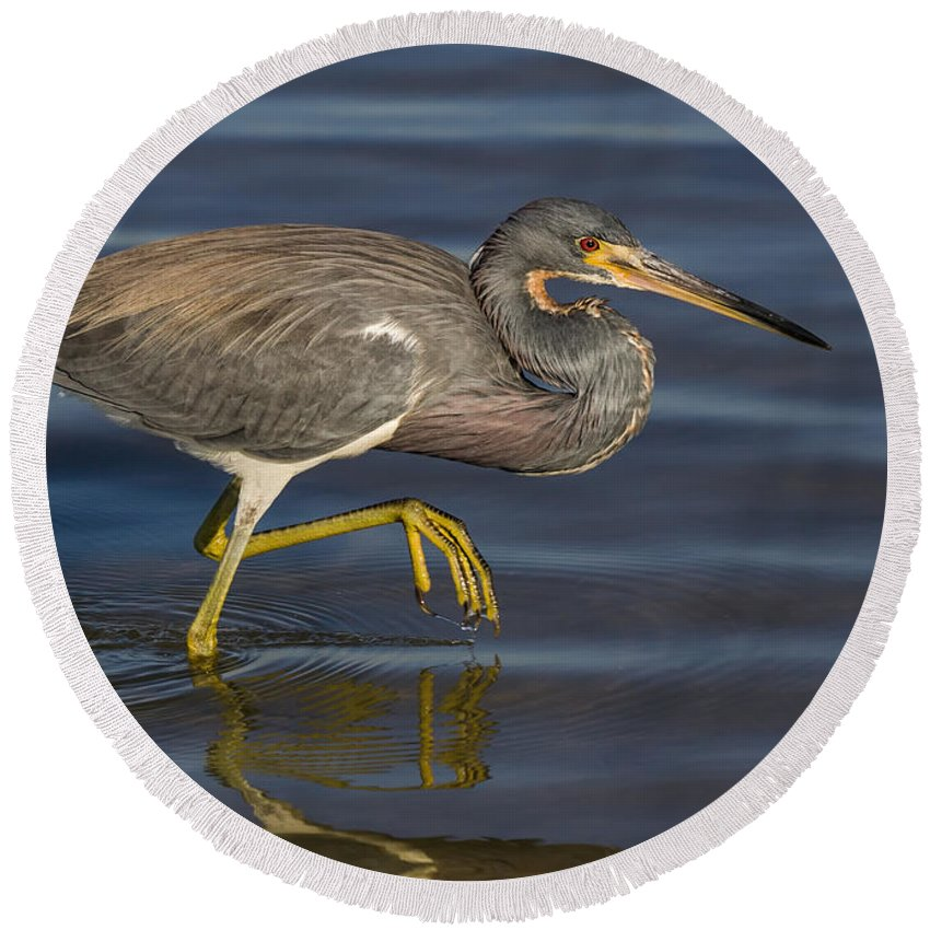 Animal Round Beach Towel featuring the photograph Tricolored Heron 1 by Jerry Fornarotto